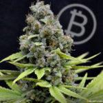 Zenapay Latest PoS Bitcoin Solution to Enter Projected $50 Billion Cannabis Market