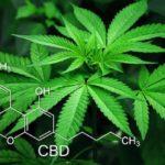 UK and Canada Legalizing Cannabis