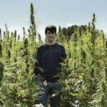 Deadline nears for hemp-farming applications